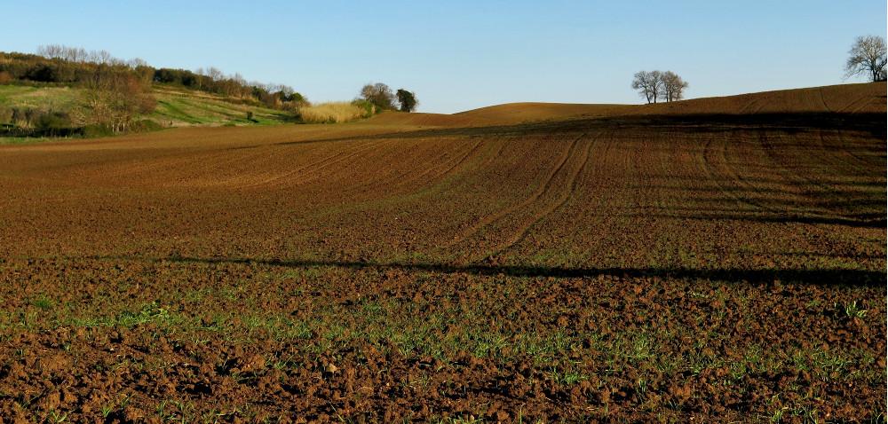 Sprzedaż ubezpieczeń upraw rolnych wBanku BGŻ