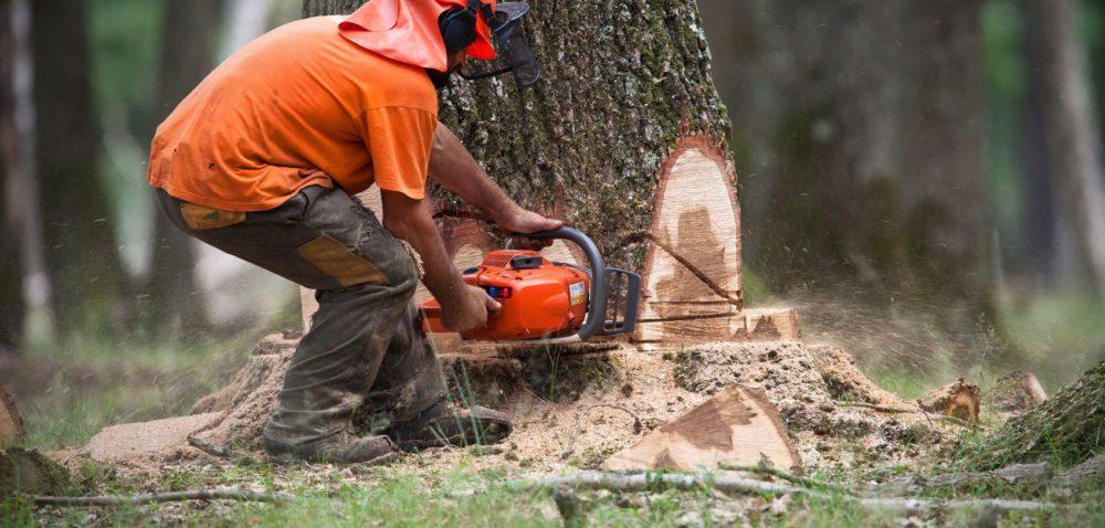 Drzewa: zanim je wytniesz, idź do gminy!