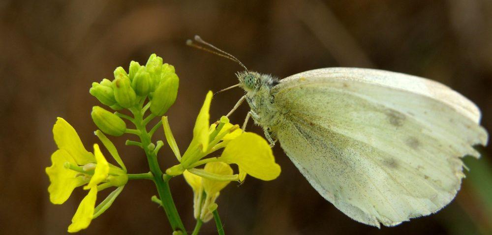 Jesienne szkodniki wrzepaku: jak chronić rośliny?