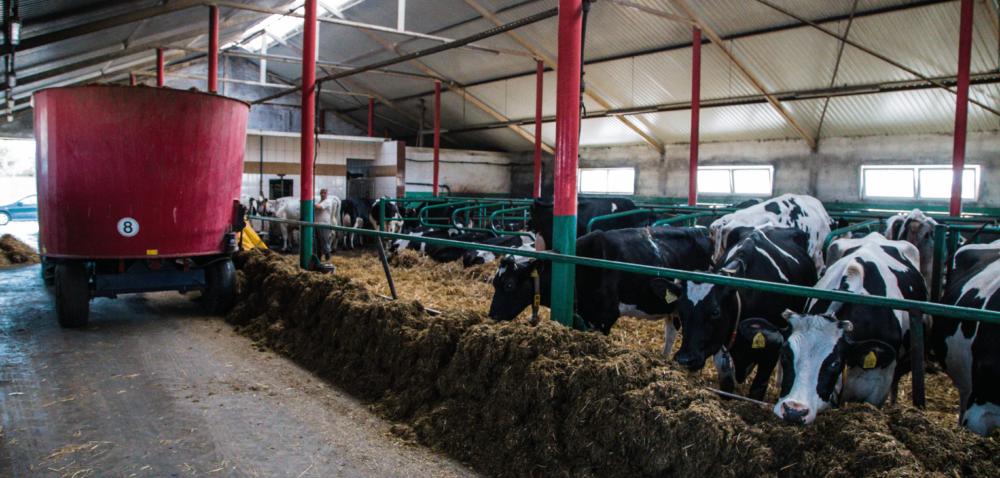 Żywienie bydła itrzody chlewnej asusza