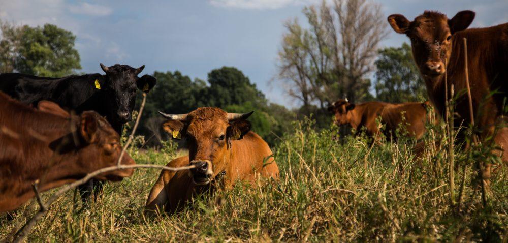 Rolnictwo ekologiczne: dlaczego warto?