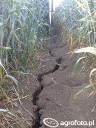 odszkodowanie za szkody wuprawach rolnych
