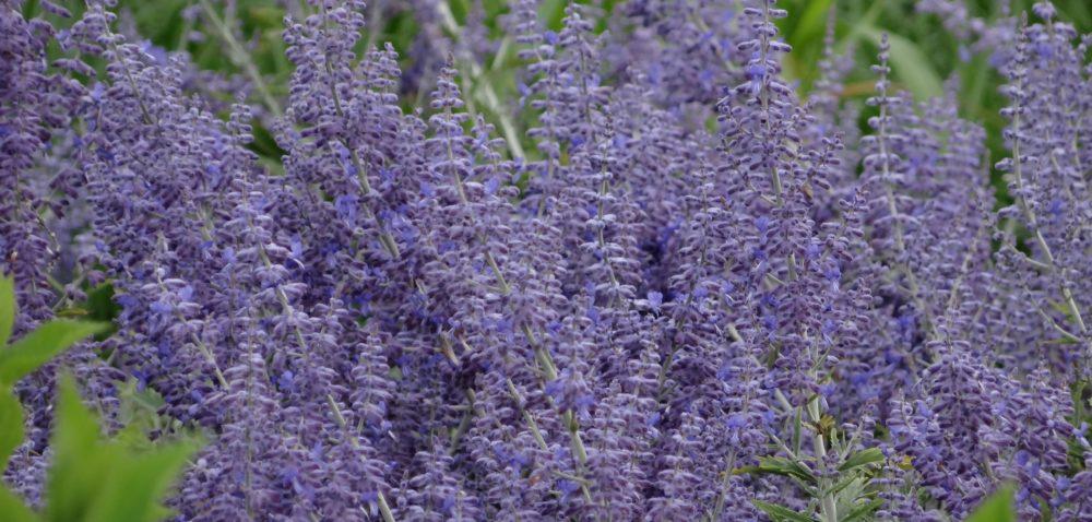 Piękny ogród: najnowsze rośliny ozdobne