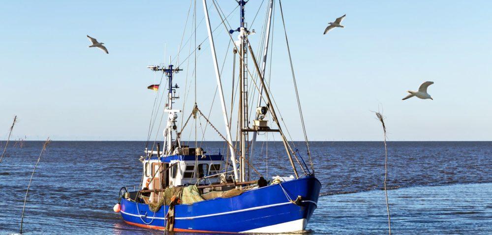 Limity połowowe dorszy: jaka decyzja?
