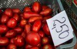 Pora na pomidora_1