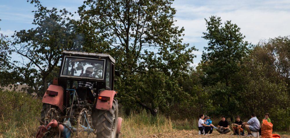 Praktyki rolnicze za granicą: dokąd warto pojechać?