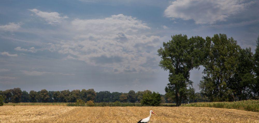 Podatek rolny: kiedy ulega przedawnieniu?