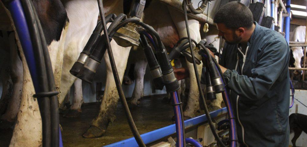 Innowacje lepszą drogą do mleczarstwa?