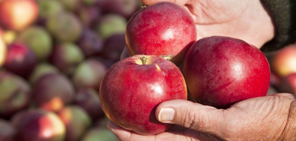 Będzie mniej jabłek przemysłowych!