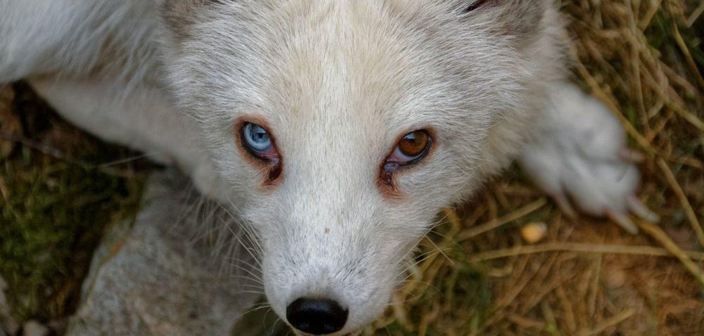 W Sejmie odbędzie się konferencja oochronie zwierząt