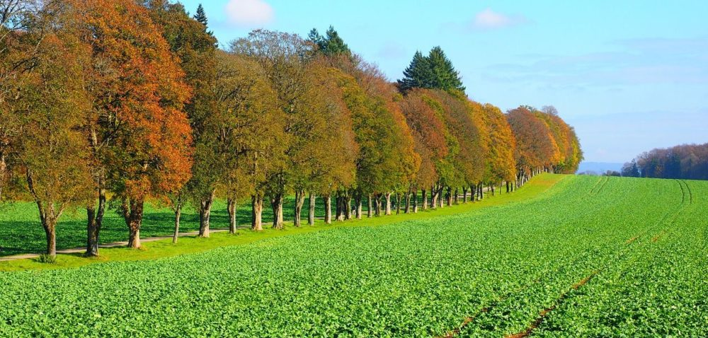 Rozpoczyna się jesienna tura ubezpieczeń uprawowych