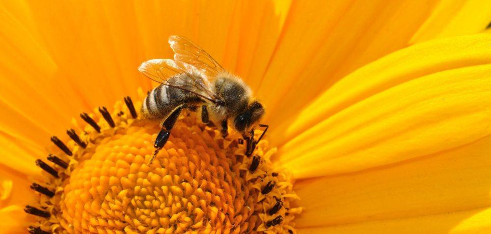 Odbędzie się szkolenie opożytkach pszczelich