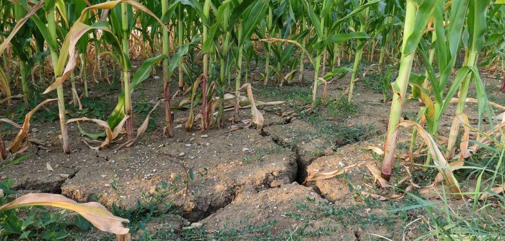 Rząd szuka rozwiązań na wypadek następnej suszy