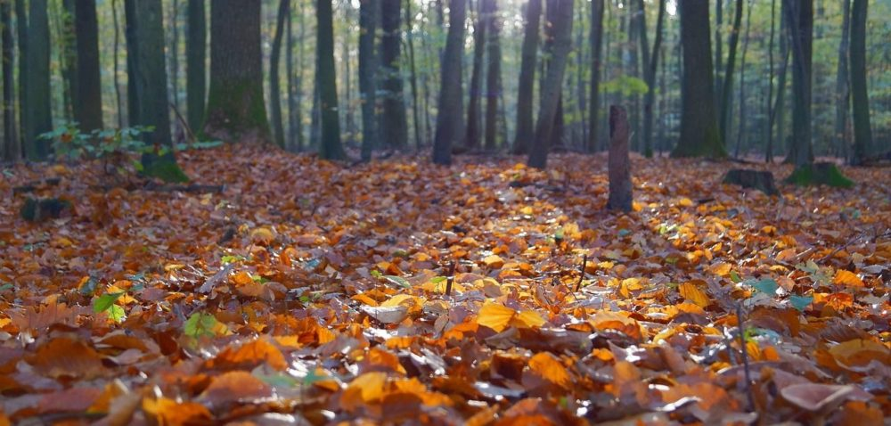 Opracowano plan wdrażania Strategii Leśnej UE