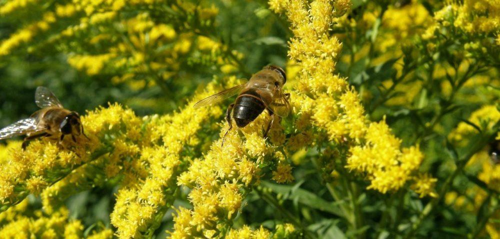 Komisja Europejska broni bioróżnorodności