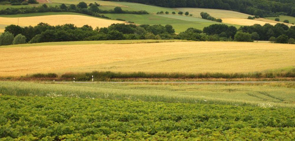 Kupno gruntu od zadłużonego rolnika: czy warto?