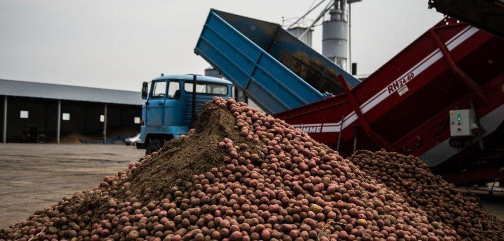 W gospodarstwach zalegają kopce ziemniaków