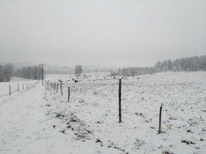 pług na zimę