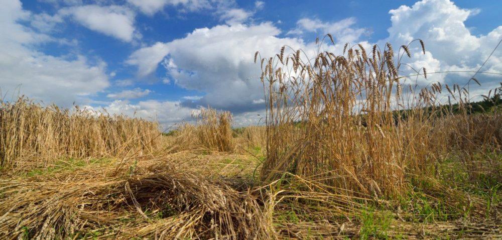 5 najczęściej popełnianych błędów przy ubezpieczaniu upraw