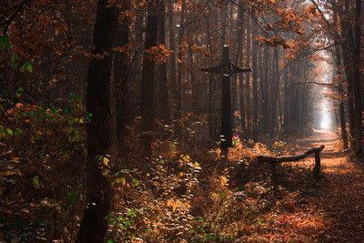 Sanktuaria znaczone modlitwą rolników: kult bł. Karoliny