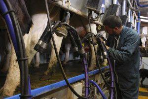 Pomoc dla producentów mleka