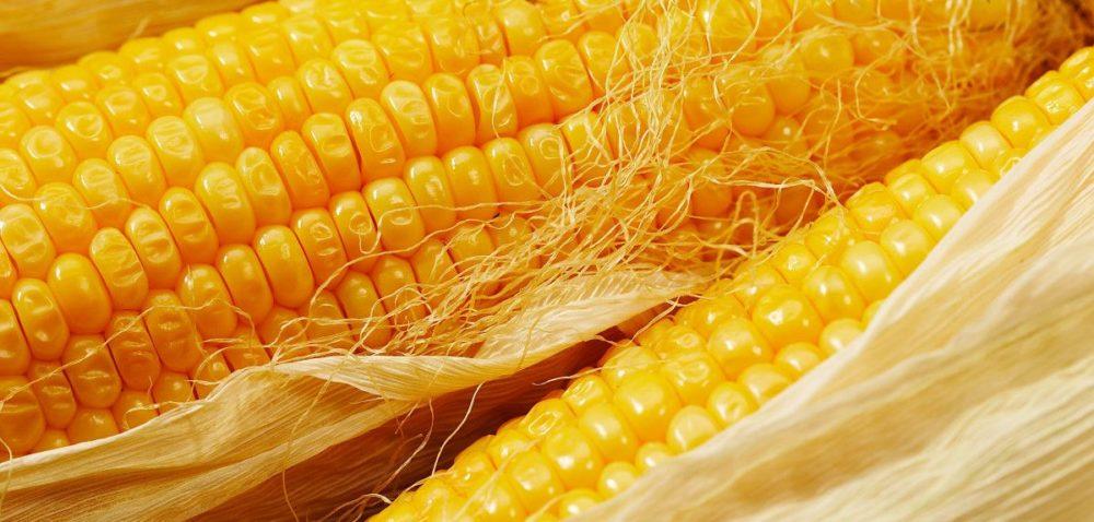 Skąd pochodzi kukurydza?