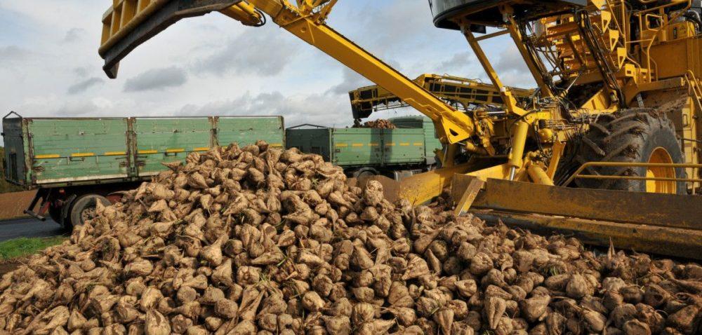 Kampania cukrownicza chce skupić 4 mln ton buraków
