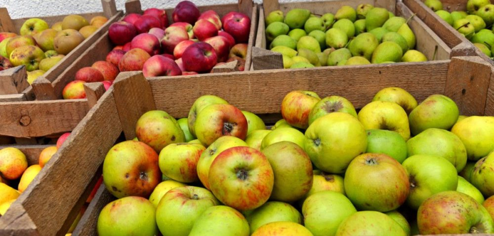 Wyniki owocowego eksportu na minusie