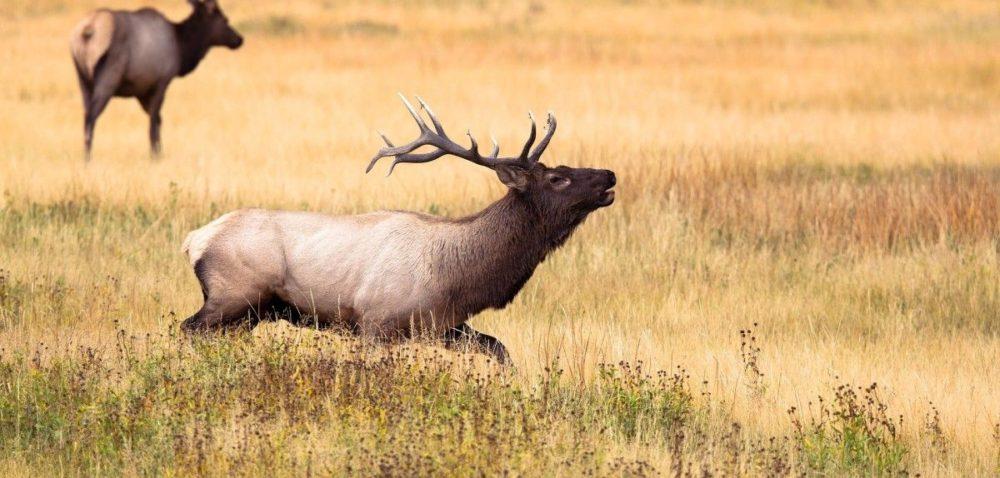 Organizacje przyrodnicze chcą zakazu polowań zbiorowych
