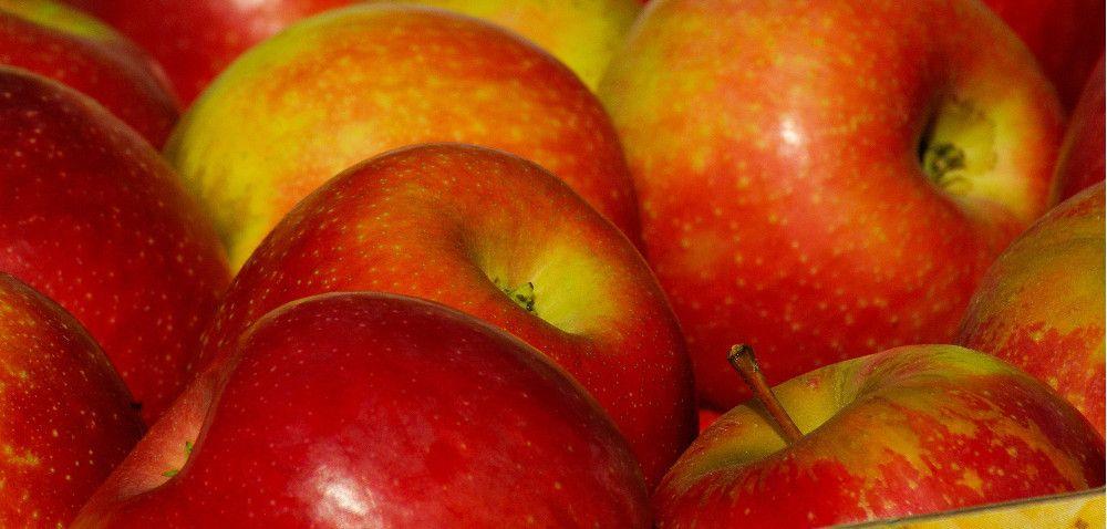 Zbiory: prawie 4mln ton jabłek
