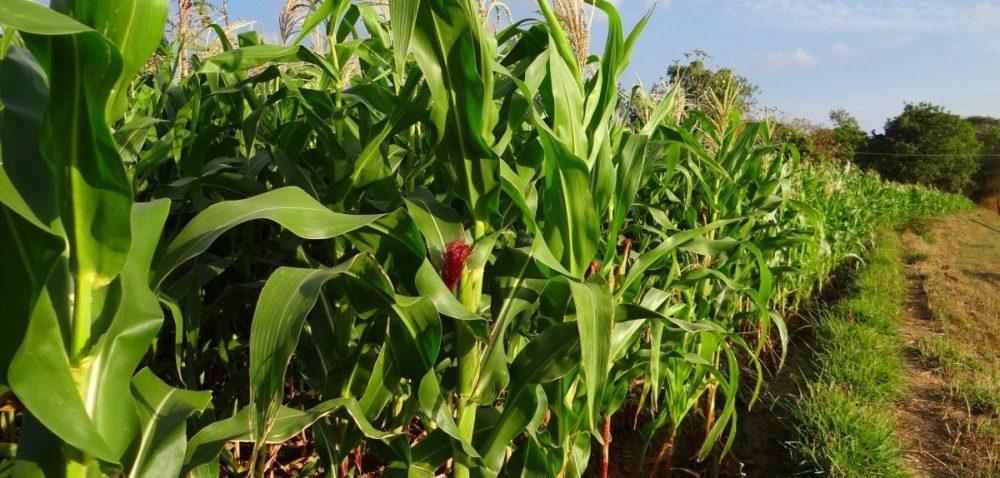 Trwa konkurs dla punktów sprzedaży środków ochrony roślin