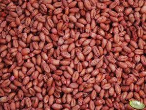 nasiona zaprawione