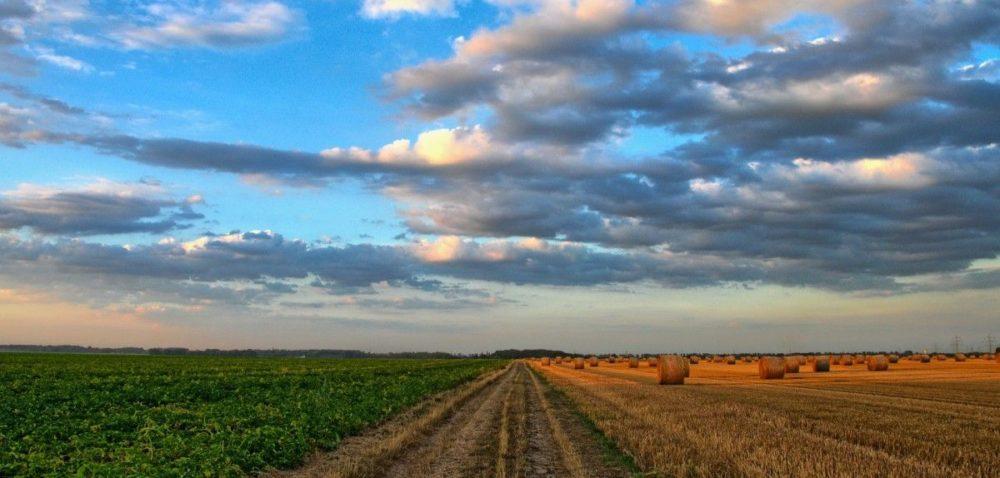Podatek rolny: kiedy przysługuje nam zwolnienie?