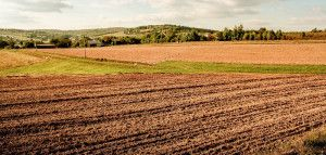 dopłaty obszarowe / punkty młody rolnik