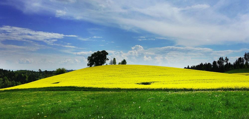 Dotacje PROW ascalanie gruntów rolnych