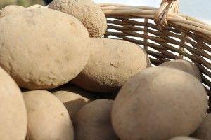 gm. Mykanów obchody dnia ziemniaka