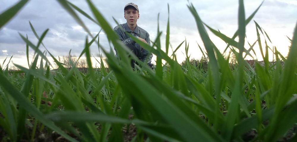 Jak chronić uprawy pszenicy jesienią?