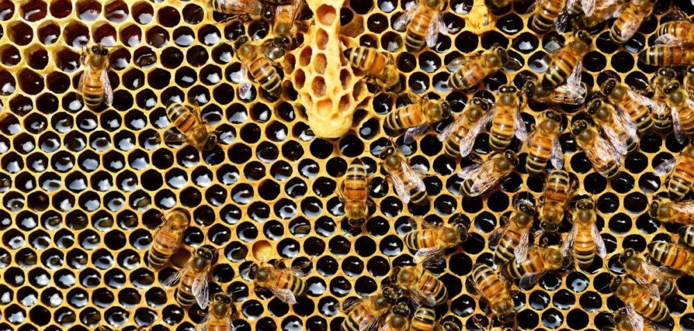 Odwiedźcie Kurpiowską Konferencję Pszczelarską