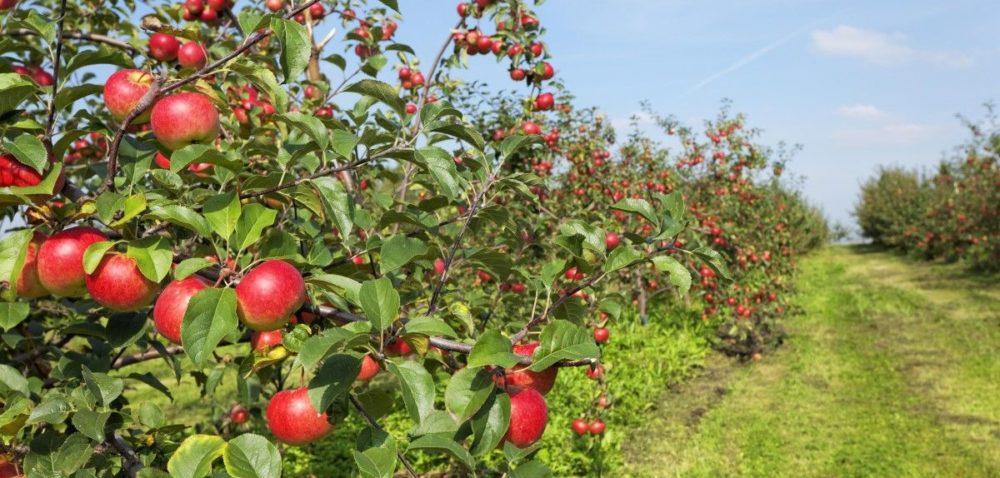 Jakie środki do sadów ekologicznych?