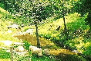 ubój owcy wymaga pisemnego zgłoszenia lekarzowi weterynarii