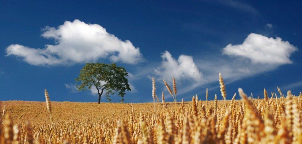 Ceny gruntów rolnych lecą wdół