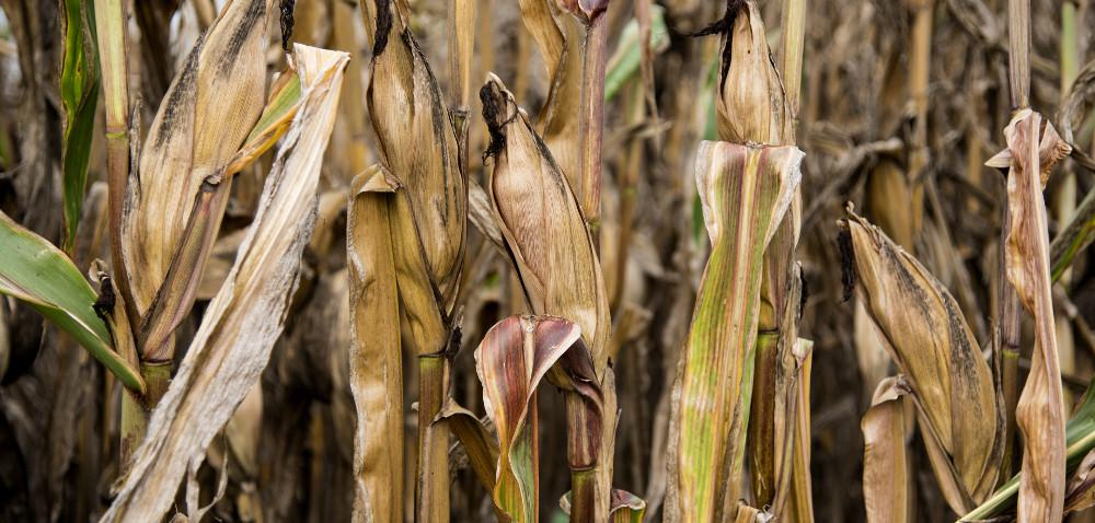 Szacowanie szkód – jakie zmiany czekają rolników?