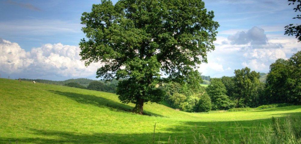 Konkurs na Święto Drzewa