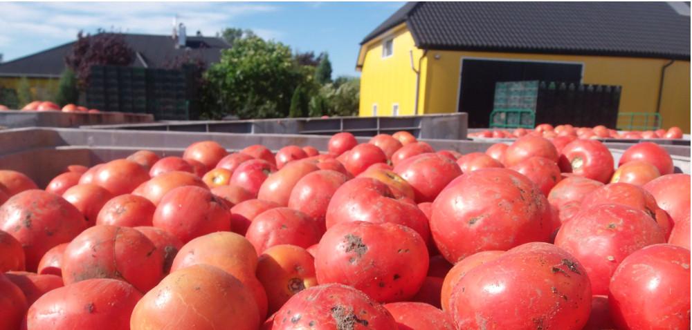 Produkcja warzyw to coś więcej niż uprawa roślin