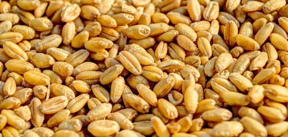 Mamy małe zapasy zbóż