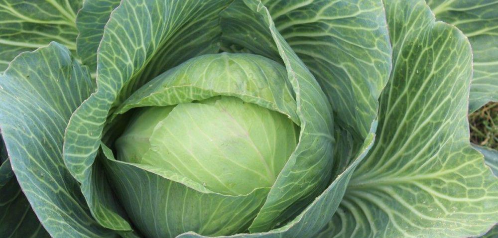 Droższe warzywa na rynkach hurtowych
