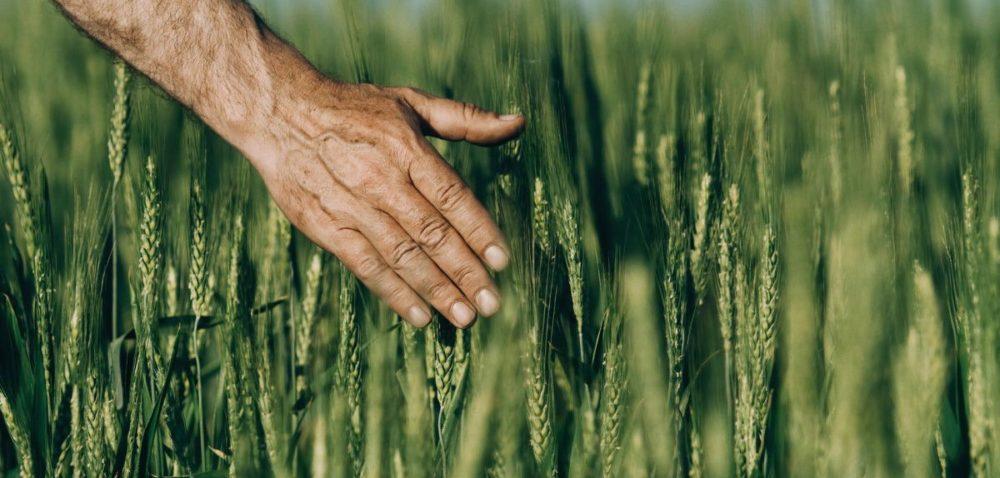 Ubezpieczenia rolnicze – rozmowy na temat zmian