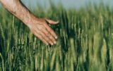 ubezpieczenia upraw: grunt to spokój