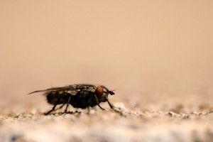 zwalczanie pasożytów