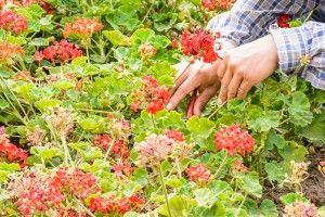 śory do kwiatów ekologicznych